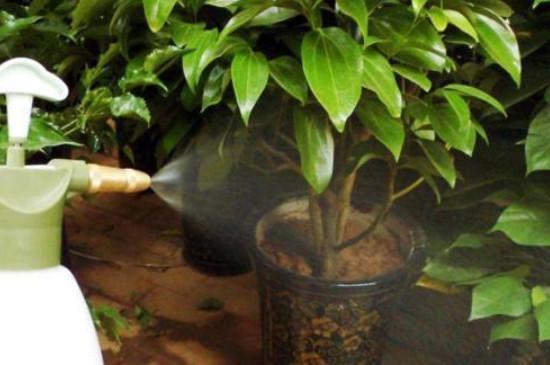 硫酸亚铁浇花使用方法