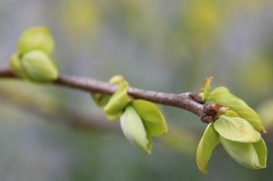 小树什么季节开始发芽