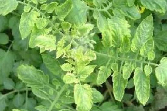 甲壳素对植物的作用