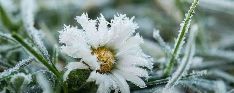 花被凍了還能活么