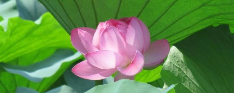 喜阳不怕晒的植物
