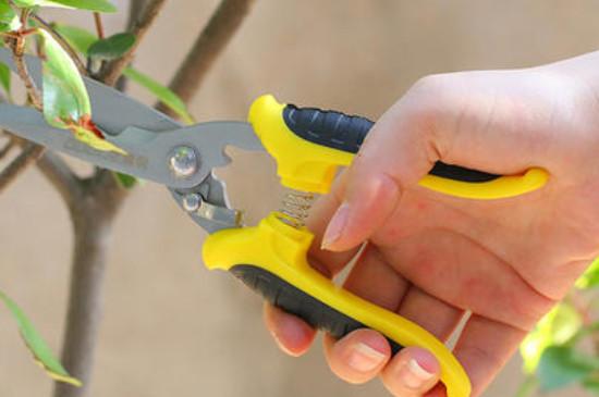 果树修剪方法及作用