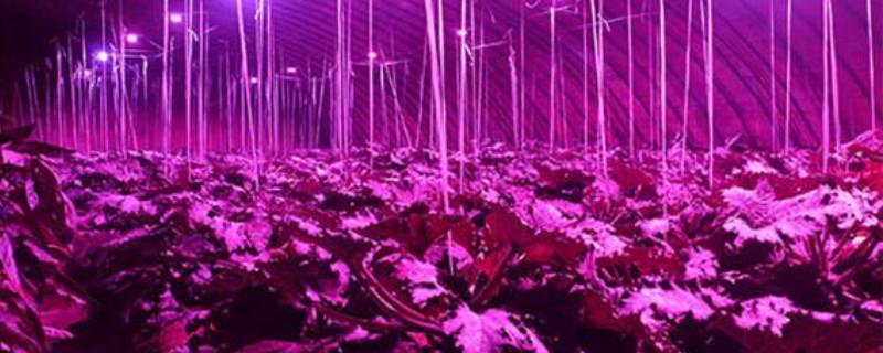 植物补光灯怎么选