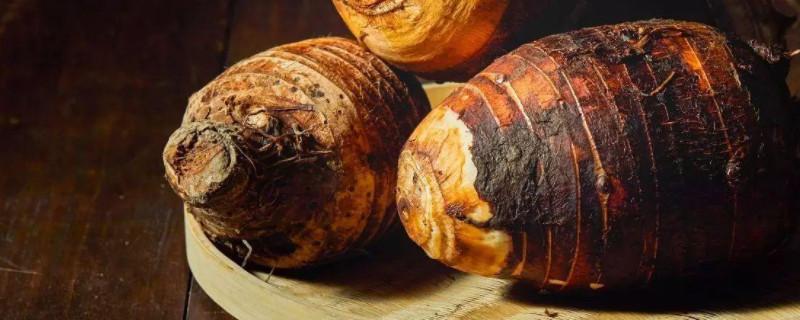荔浦芋头种植时间和方法