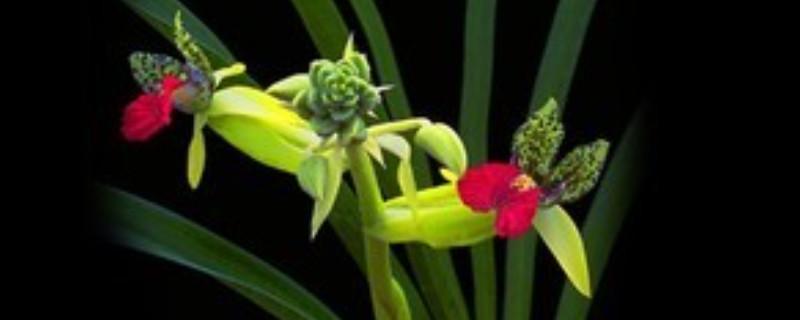 兰花的浇水方法和注意事项