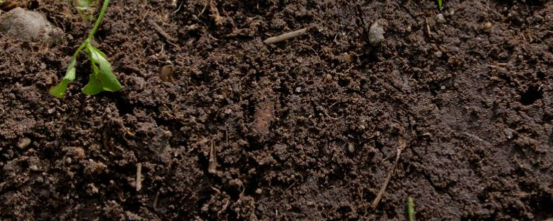 土壤怎么杀菌消毒