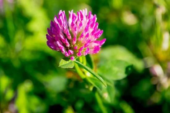 花卉养殖的技巧