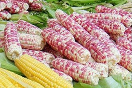 糯玉米种植时间和方法