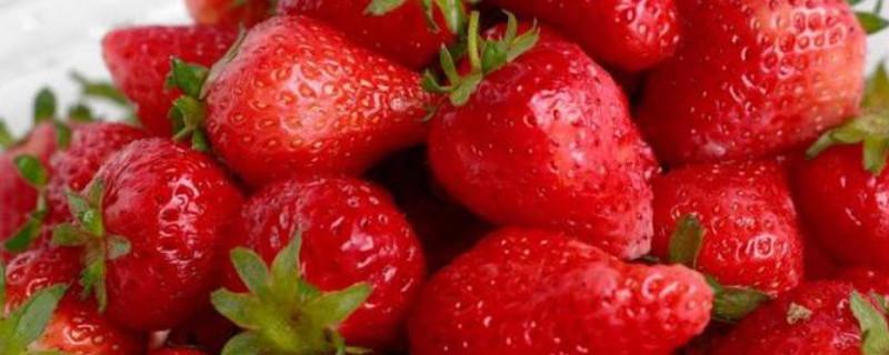 草莓种子怎么播种发芽