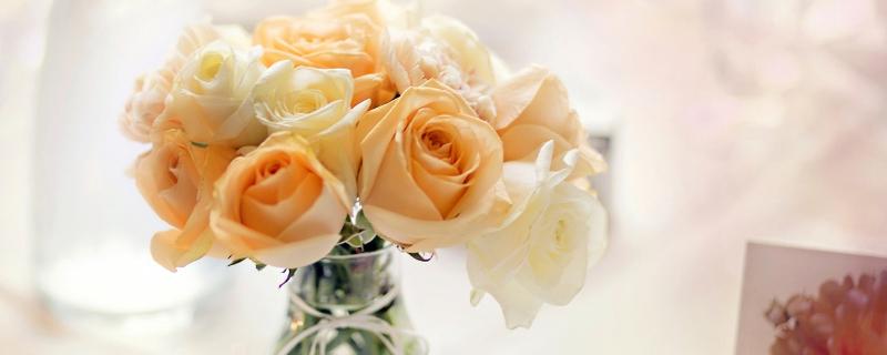 摘下来的玫瑰花怎么养才不会枯萎