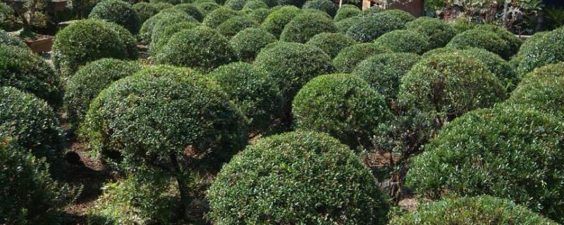 赤楠怎么养殖方法