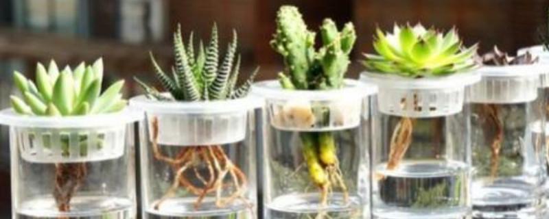 水培植物换水还是加水
