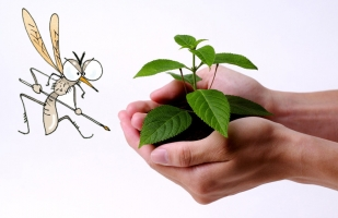 夏季适合种什么植物:推荐11种植物供您选择