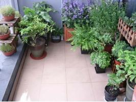 盆栽花卉秋季如何管理:管理五大要素