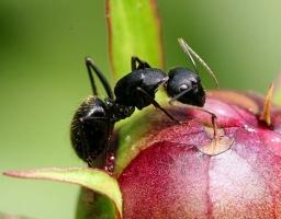 花盆里有蚂蚁怎么办:三招帮您搞定