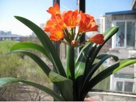 为什么室内养的花常常比室外养的花生长差