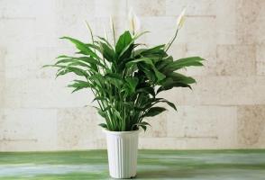 光照对花卉开花有什么影响