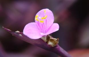要养好一种花需要了解哪些知识