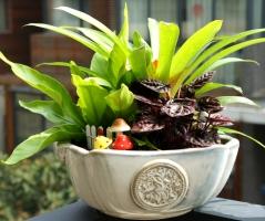 组合盆栽为什么正日益成为一种新时尚