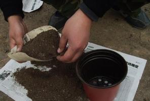 怎样将培养土消毒:日光消毒 药物消毒 锅炒消毒