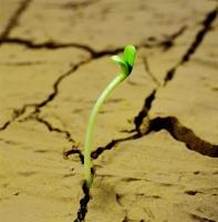 怎样判断盆土已经干了:目测法 敲击法 指测法