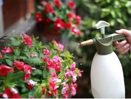怎样给阳台养的花增加空气湿度