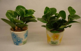 土壤对花卉生长发育有什么作用
