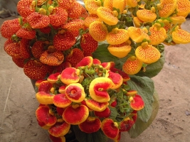 哪些花卉不能向植株上洒水