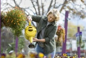 为什么浇水是养花的关键