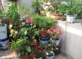 为什么家庭室内养的花常常比室外养的花生长差