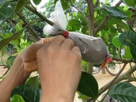 繁殖哪些花木需用高枝压条法