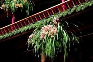 什么是吊盆栽植