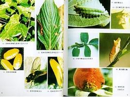 常用的拟除虫菊酯类杀虫剂有哪些