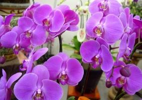 什么是花卉生长调节剂