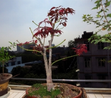 为什么要摘叶?摘叶对花卉生长发育起什么作用?