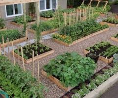 家庭小菜园规划时要注意哪些问题