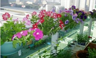 在阳台栏杆上怎样摆放盆花才美
