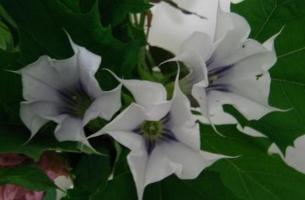 哪些常见植物可以用来制作土农药