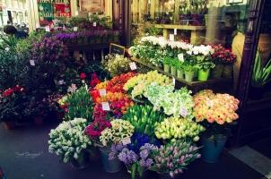 花卉的分类:常见的三大种分类