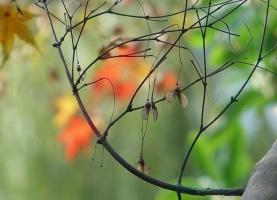 四季养花须知