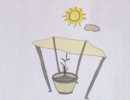 花卉生长条件:五方面,每方面都很重要