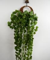 怎样制作蕨类植物壁挂