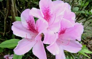 花木生长期修剪有哪些形式