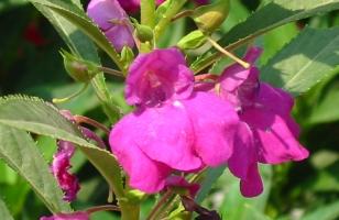 花卉种子怎样采收和贮藏
