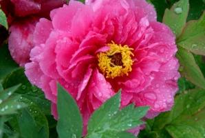 花卉病害是怎样引起的