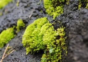 盆土表层长满苔藓好不好