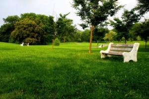 草坪怎样管理
