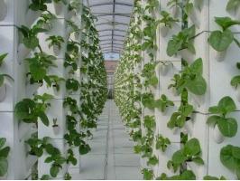 无土栽培法有哪些优点