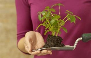 怎样从有土栽培转入无土栽培