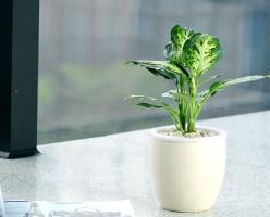 繁殖万年青类植物都有哪些方法